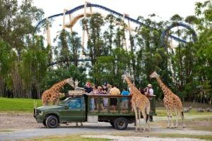 Serengeti Plain - Um Safari onde agente vê centeeenas de animais africanos!